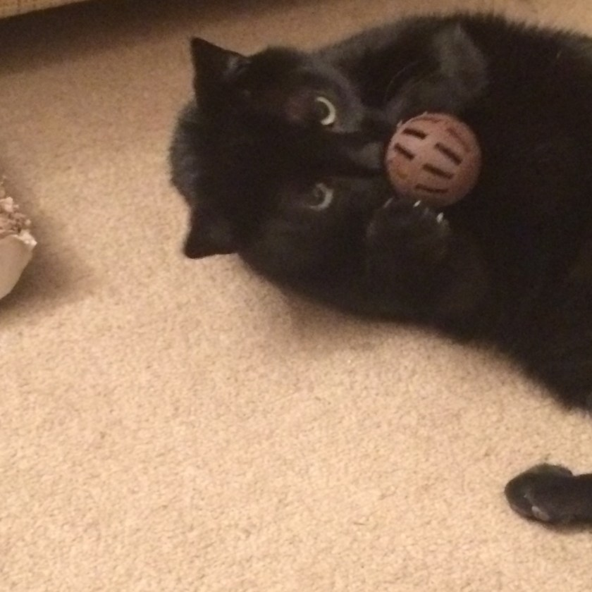 Loki playing with his 3D printed ball!