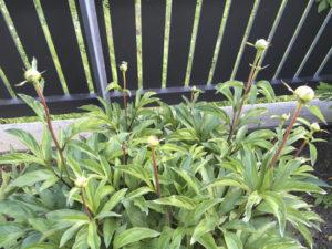Flower buds , holding promise