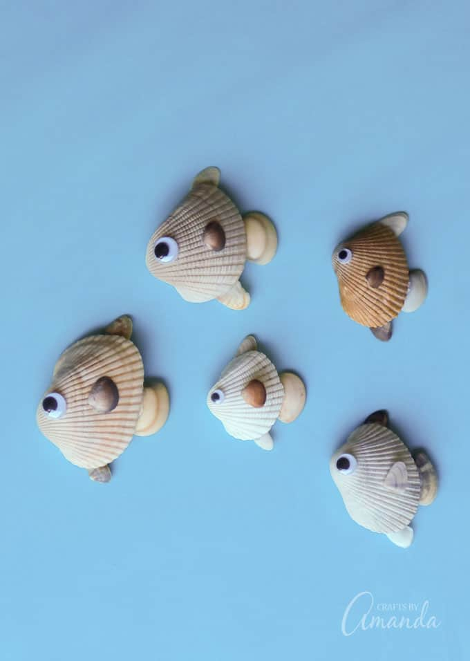 seashell fish put those