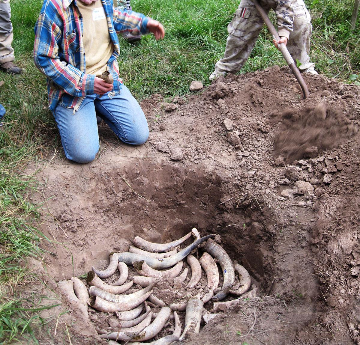 biodynamic-cow-horn-burying-craftsmanship
