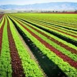 Your Salad's Difficulty with Sustainable Farming