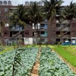 Cuba's Harvest of Surprises