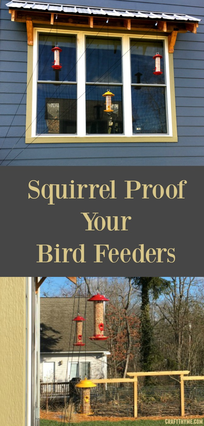 How to hang a squirrel proof bird feeder