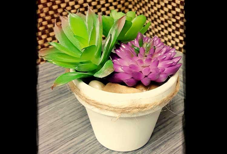 Succulent Pot @ Meridian Location | Meridian | Idaho | United States