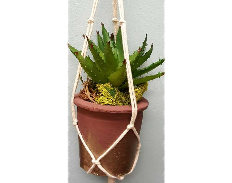 Hanging Succulent Pot @ Meridian Location | Beaverton | Oregon | United States