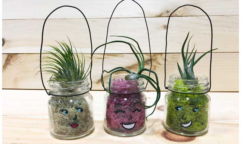 Air Plant Buddies @ Hazel Dell Location | Gresham | Oregon | United States