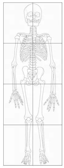 Anatomy Art Projects