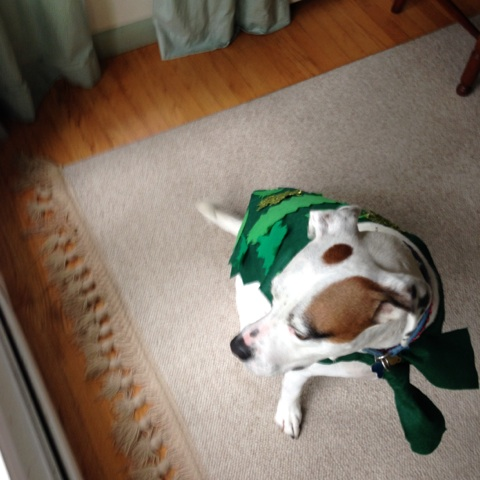 Second Star to the Right: Peter Pan Inspired Dog Costume (2/6)