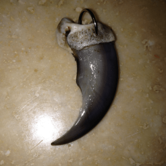 Real bear claw pendant