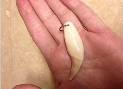 Real Bear tooth pendant