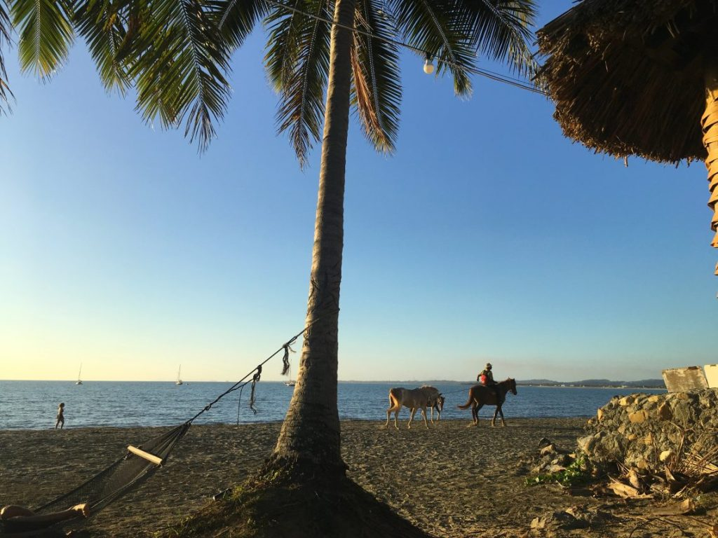 beach horse palm tree Nadi