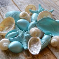 Bulk Seashells, Craft Shells
