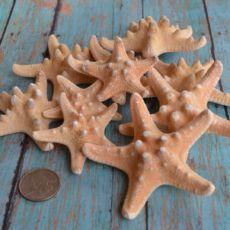 Beach Decor, Starfish, Starfish Bulk Craft