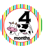 Cow - 4 months