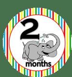 Elephant - 2 months