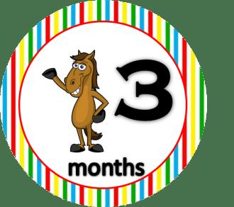Horse - 3 months