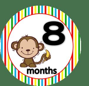 Monkey - 8 months