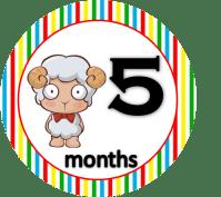 Sheep - 5 months