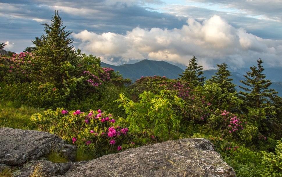 Roan Mountain, NC