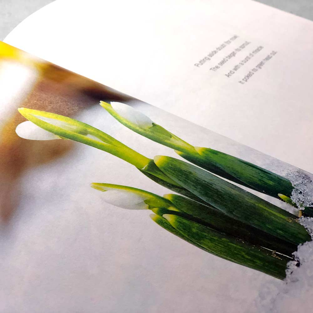the-wildflower-book-page