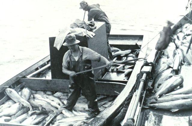 800px-Loading_salmon