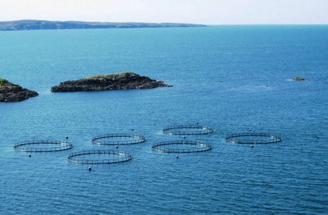 offshore net pens