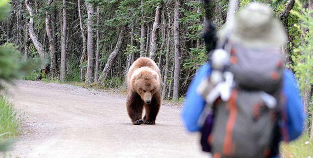 hiker meets bear katmai Jake Bortscheller