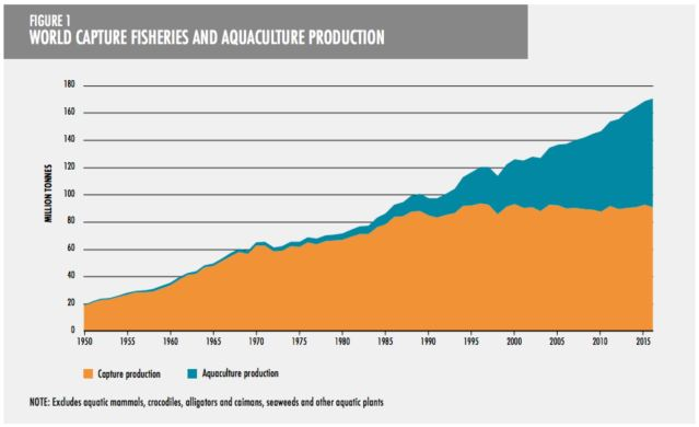 fish production