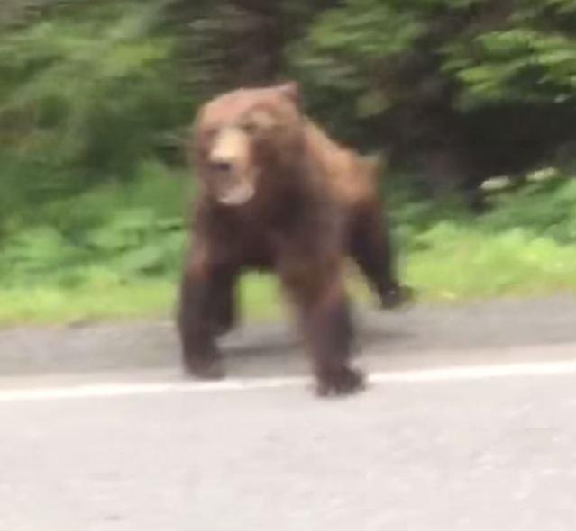 car charging bear