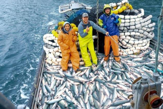 salmon haul