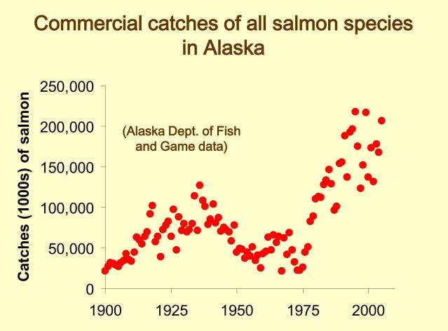alsaka salmon NOAA survival at sea