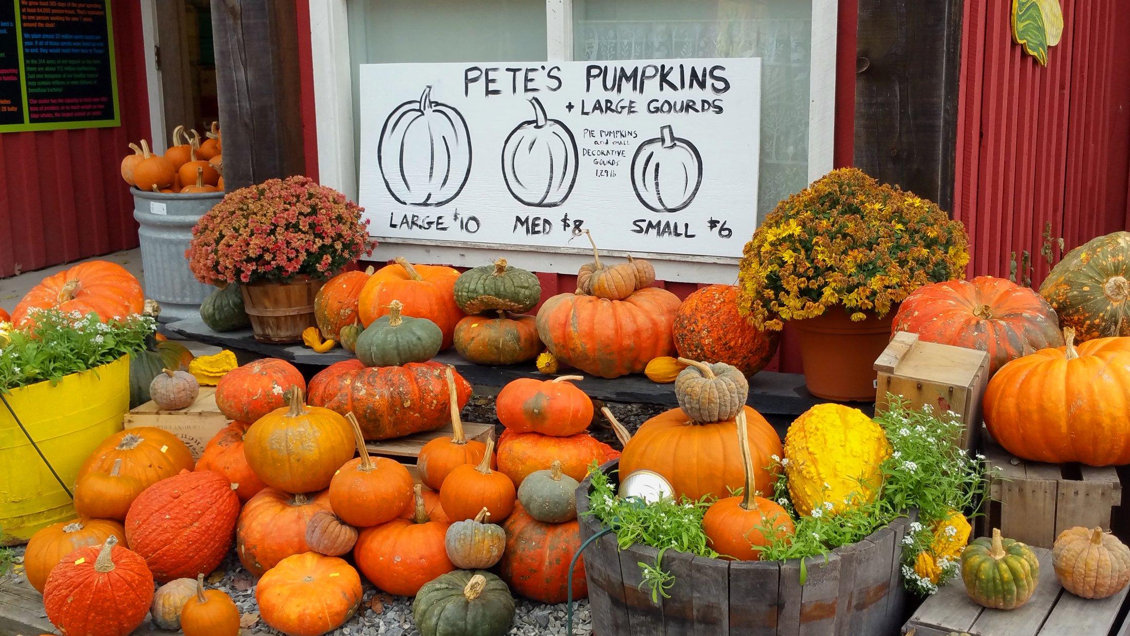 vermont-petes-pumpkins-2