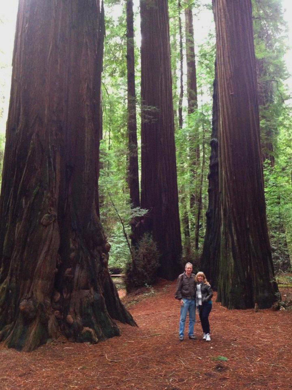 Giant redwoods at Humboldt Redwoods State Park