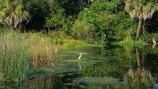 Green Cay Wetlands offers scenic viewing from three boardwalk loops. (Craig Davis/CraigslegzTravels)