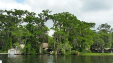 Tour boats move between lakes on the Winter Park Scenic Boat Tour through narrow canals. (Criag Davis/Craigslegztravels.com)