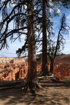 The trail from Inspiration Point to Sunset Point offers stunning views of Bryce Canyon on a comfortable hike. (Craig Davis/Craigslegztravels.com)