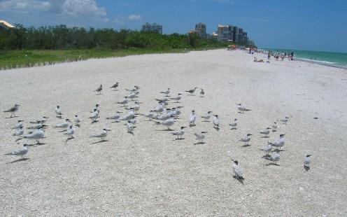 Clam Pass Park beach is a hidden gem in Naples, Fla. (Craig Davis/Craigslegztravels.com)