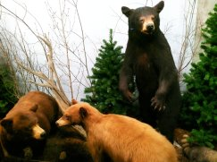 A quirky feature at Jasper's Whistler Inn is the wildlife museum. (Craig Davis/craigslegztravels.com)