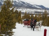 Mules pull the sleighs through a pine forest on the Two Below Zero ride in Frisco, Colo. (Craig Davis/Craigslegztravels.com)