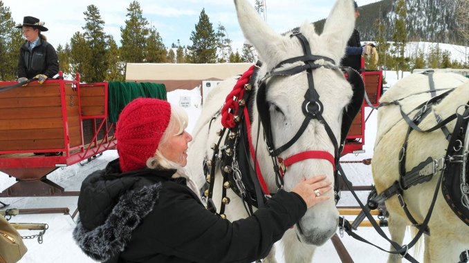 Two-mule teams pull the sleighs at Frisco (Colo.) Adventure Park. (Craig Davis/Craigslegztravels.com)