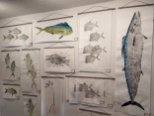 Lisa Lee creates realistic prints of a variety of fish with the Gyotaku method, either in black and white or embellishing with their natural colors. (Craig Davis/Craigslegztravels.com)