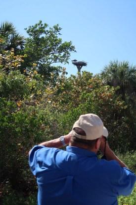Ding Darling Wildlife Refuge has more than 245 species of birds, including orprey. (Craig Davis/Craigslegztravels.com)