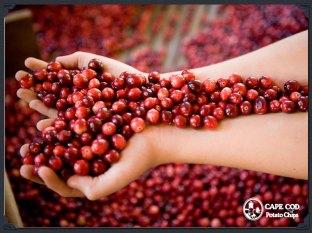 cape_cod_cranberries