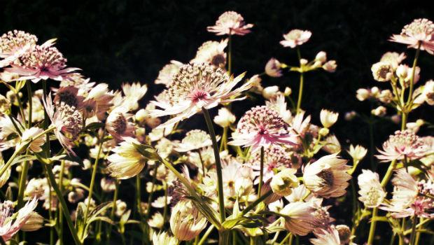 blommor620x350
