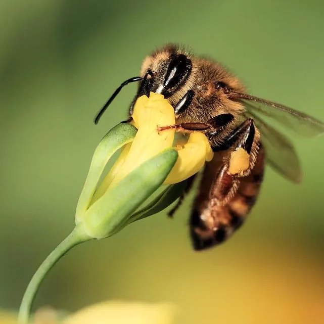 keeping-bees-away-from-your-family