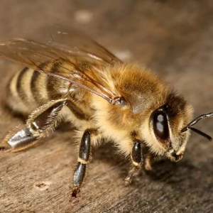 Commercial-and-Industrial-Bee-and-Wasp-Removal