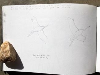 Crane form in flight