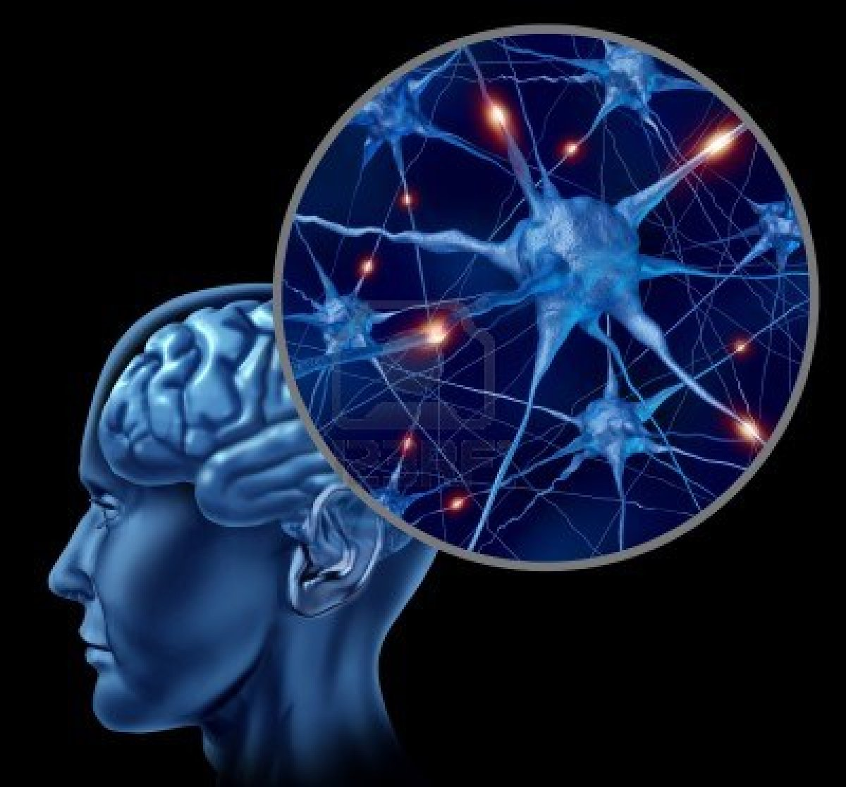 Whytary Fat Is Vital To Optimal Brain Function