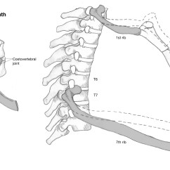 Rib Numbers Diagram Security Camera Installation Explain How The Ribs Is Attached To Spine Yahoo Answers