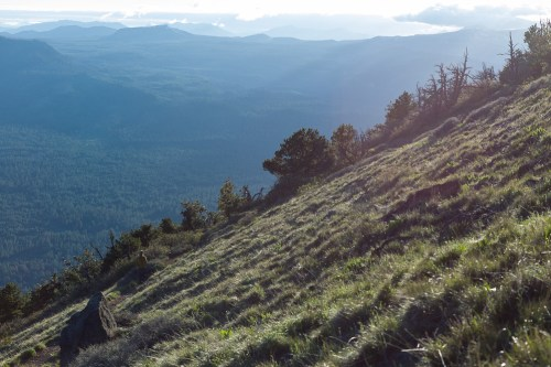 Blackbutte-2